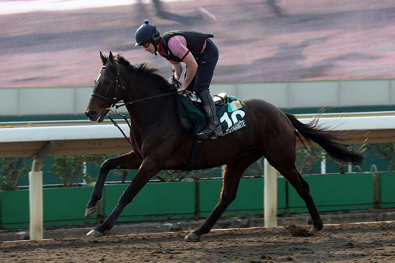 Max Dynamite exercises at Sha Tin on Wednesday morning ahead of the LONGINES Hong Kong Vase.