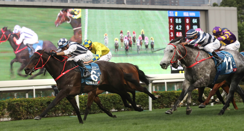 Danny Shum-trained Seasons Bloom (No. 6), with Joao Moreira on board, edges Fifty Fifty (No. 11) to win the G1 Stewards' Cup (1600m), the first leg of Triple Crown, at Sha Tin Racecourse today.
