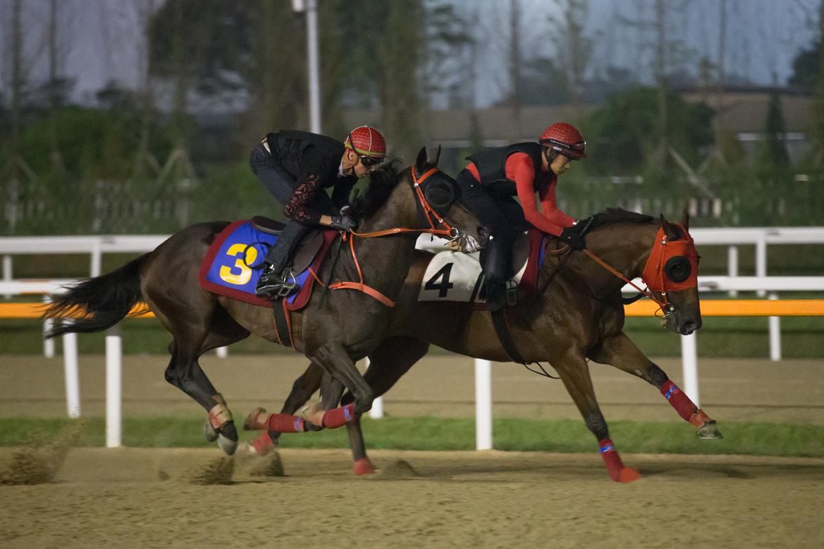 「永旺年年」(丁冠豪,4號) 及「縱橫大地」(羅理雅,3號) 今早在首爾馬場結伴出試,分別備戰本週日的韓國短途錦標及韓國盃。