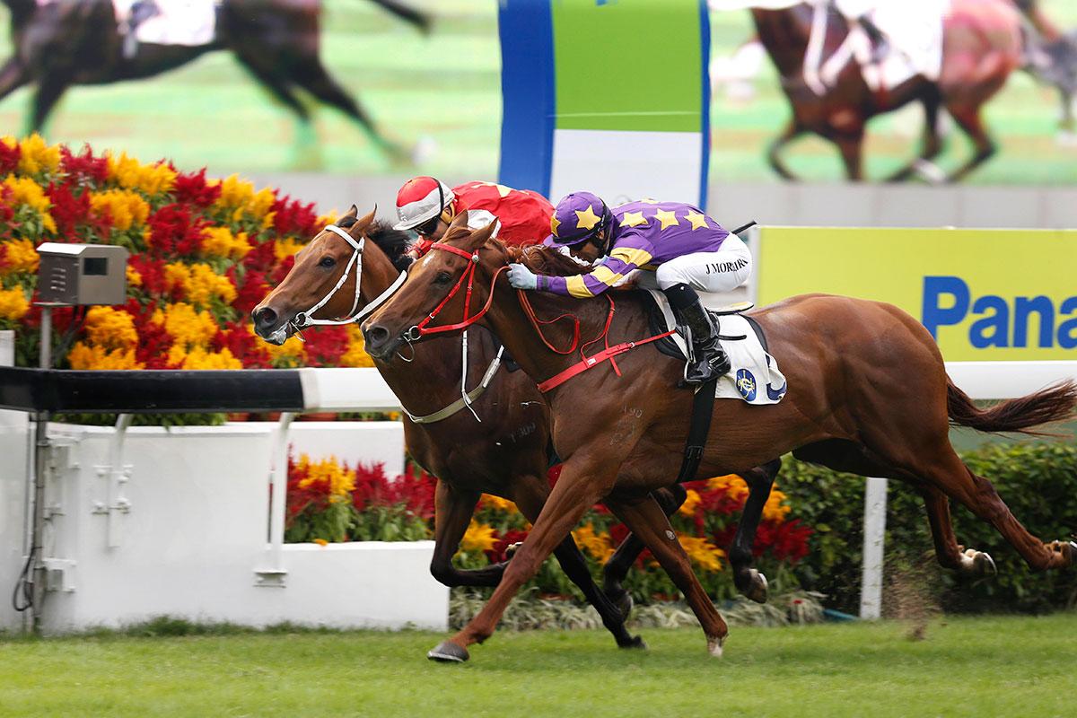 今午在沙田馬場舉行的樂聲盃賽事,由騎師莫雷拉策騎的「西方快車」(3 號馬) 勇奪此賽冠軍。