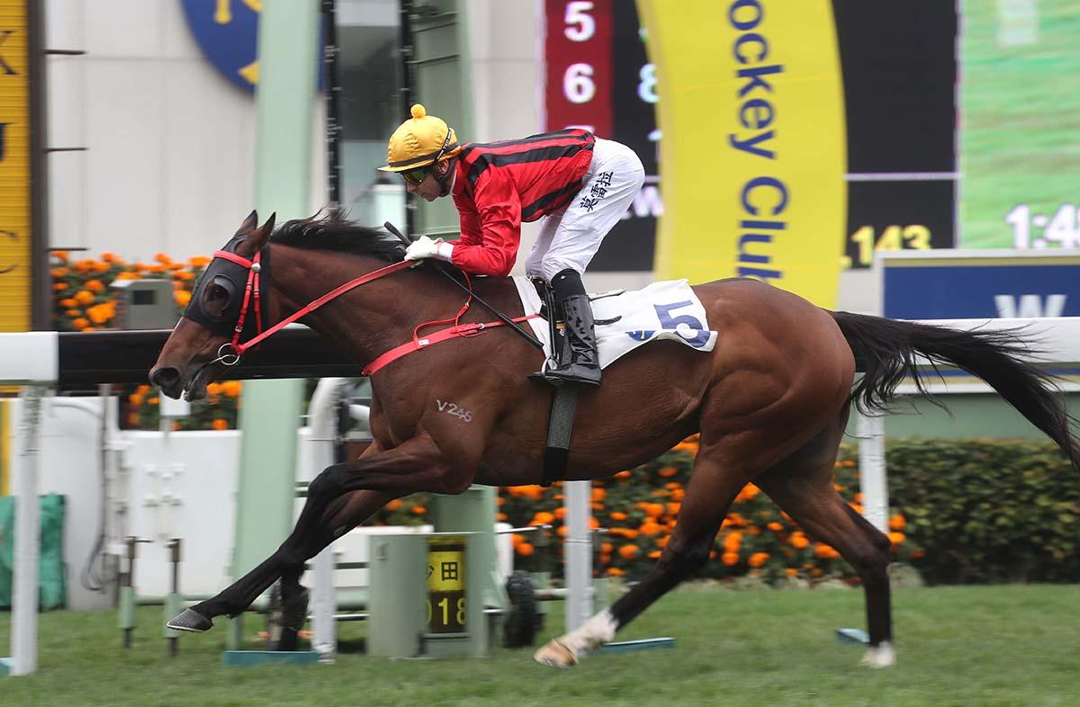 「達羅素」今日於沙田攻下三級賽百週年紀念銀瓶讓賽,週三後四日內取得第二場頭馬。