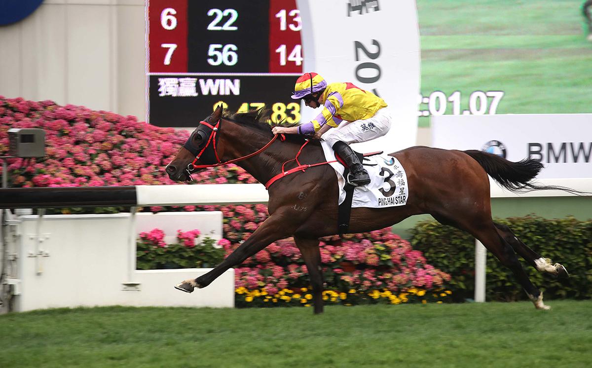 應屆香港打吡大賽冠軍「平海福星」將在愛彼女皇盃中力爭其首次一級賽勝利。