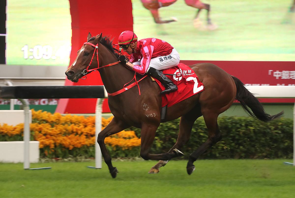 香港短途錦標盟主「紅衣醒神」是主席短途獎的主隊爭標希望。