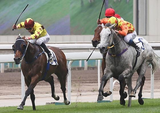 香港賽駒輕鬆備戰克蘭芝一哩賽