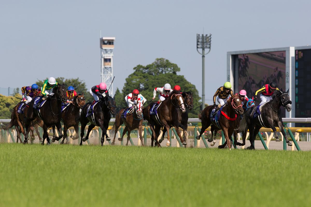 「西方快車」(藍帽,左)在一級賽安田紀念賽中跑第十名,由李慕華策騎的「魔族雅谷」(黃帽)勇奪此賽冠軍。