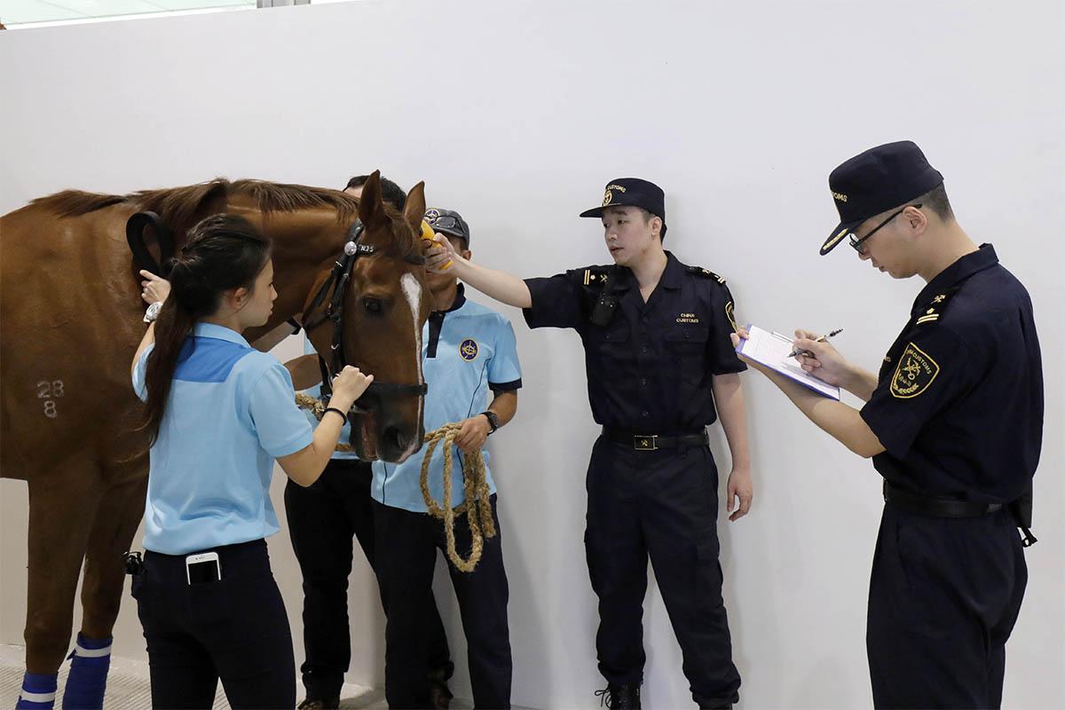 首批十四匹來自賽馬培訓發展委員會馬房的退役馬匹於星期二上午運抵從化馬匹訓練中心。牠們是首批長遠進駐中心的馬匹。