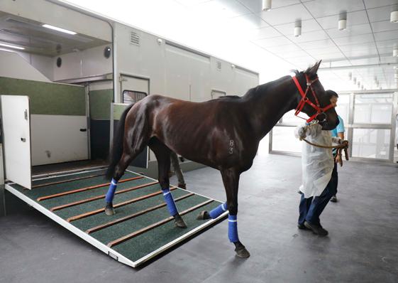 馬會從化馬匹訓練中心開始運作