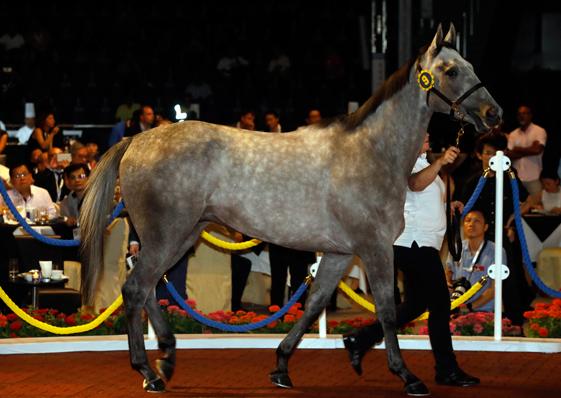 Shamardal子嗣在香港國際馬匹拍賣會(6月)以最高價售出