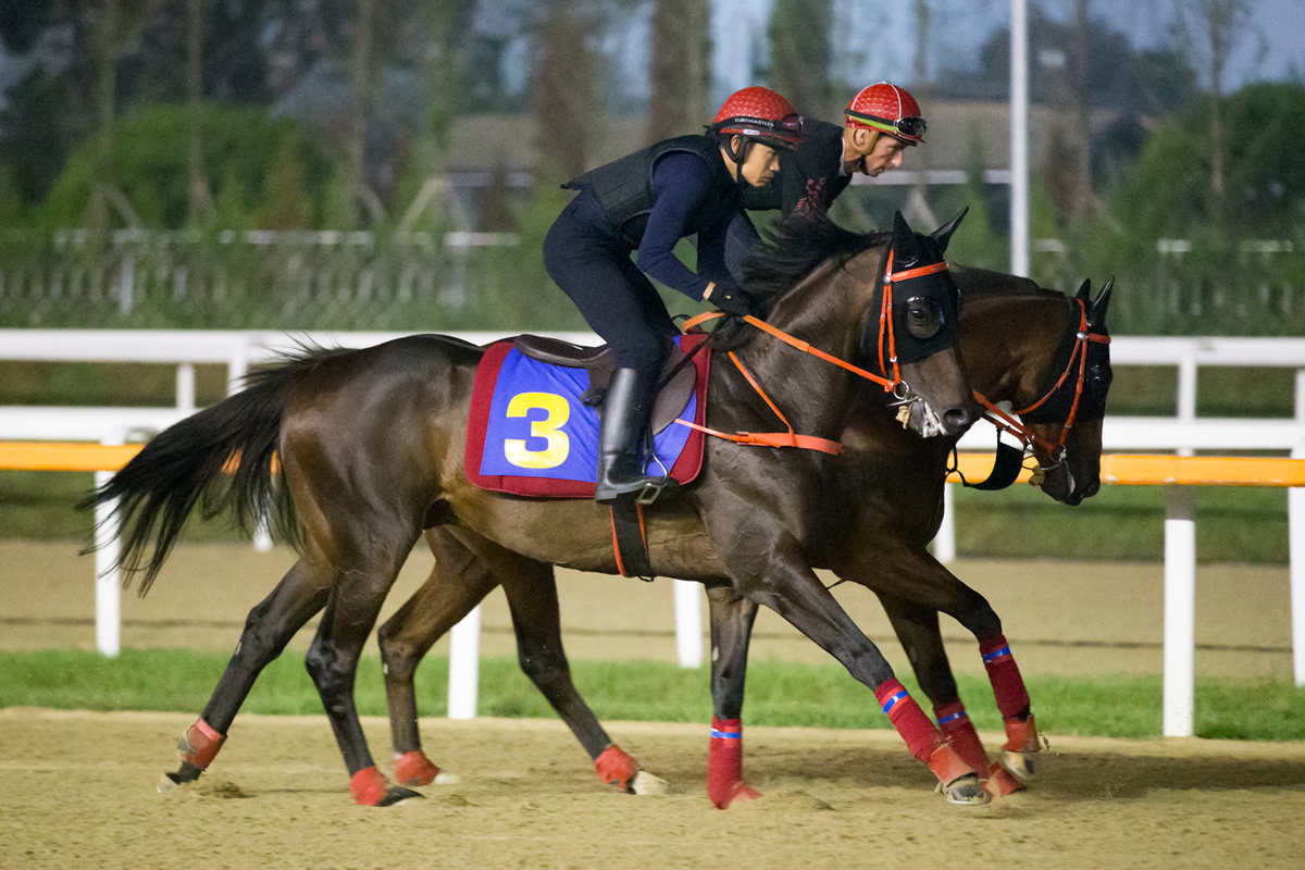 Lucky Year (inside) exercises with Circuit Land (outside) at Seoul racecourse this morning.