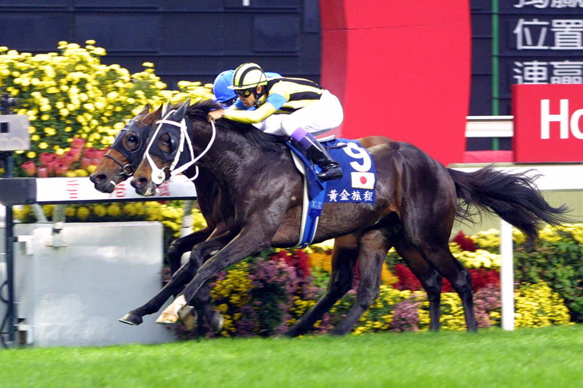 Stay Gold was the first Japanese winner of the Hong Kong Vase when he won it in 2001.