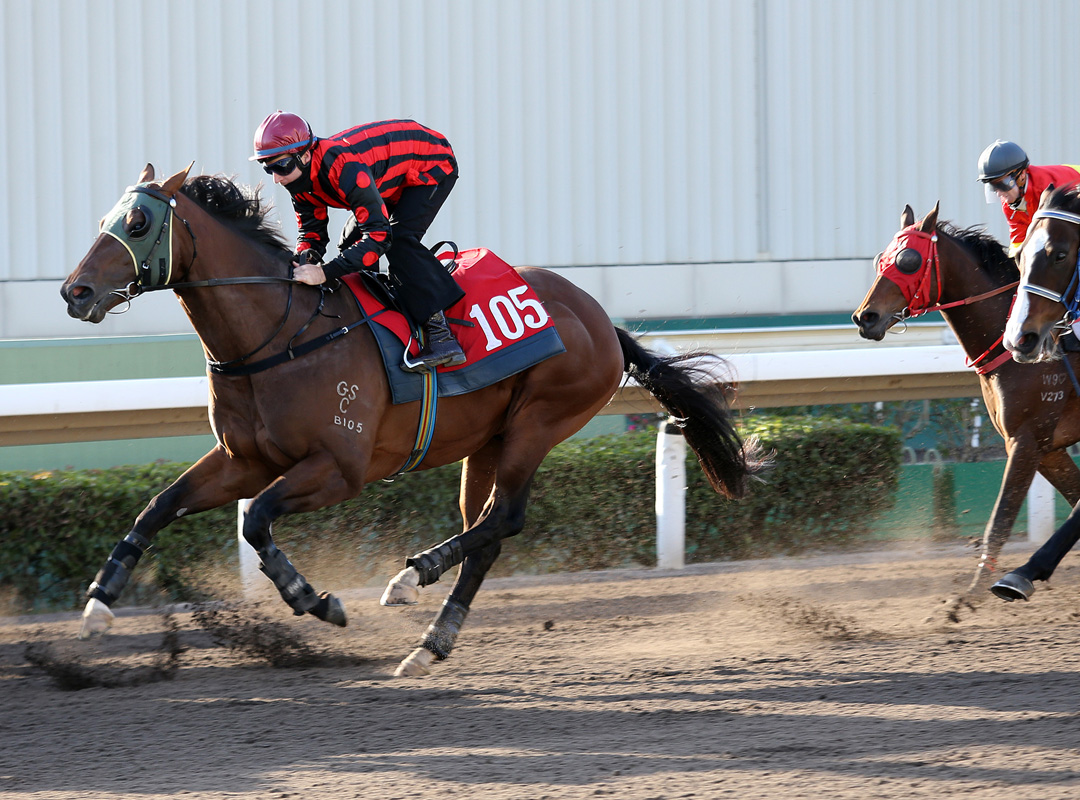 Good Standing (front) is on track for the Hong Kong Classic Mile.
