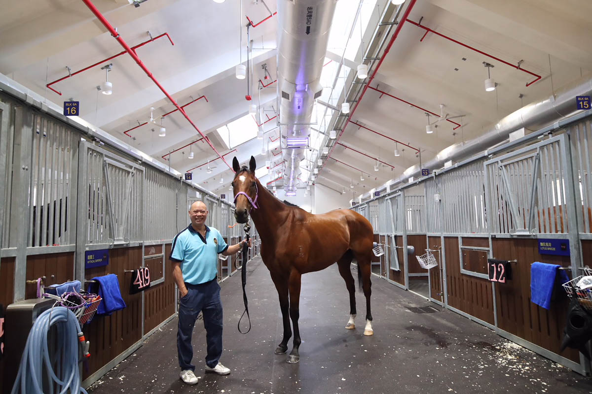 Trainer Chris So is confident that Fabulous One will perform well on Sunday.