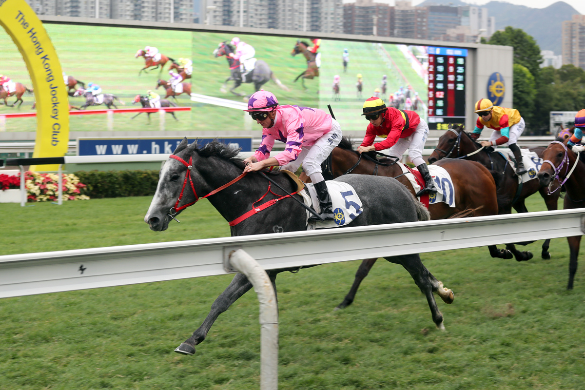 Hot King Prawn has won five races over 1000m at Sha Tin so far in his career.