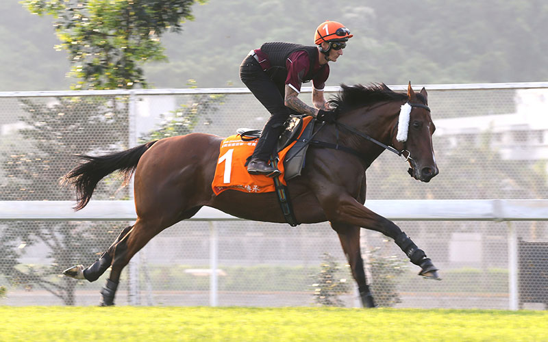 Beauty Generation worked on the turf at Sha Tin this morning.