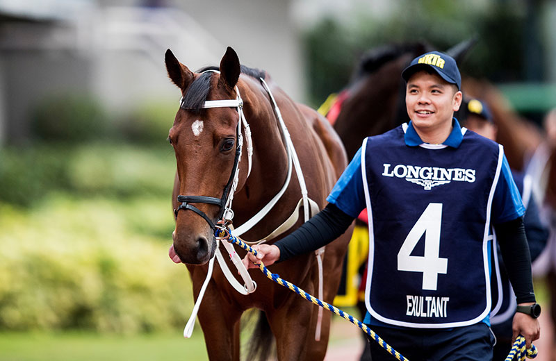 Hong Kong has only three 2400m races each a season – Exultant has won all three.