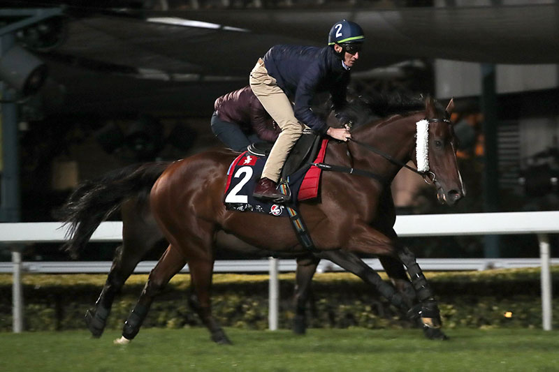 Beauty Generation gallops at Sha Tin this morning.
