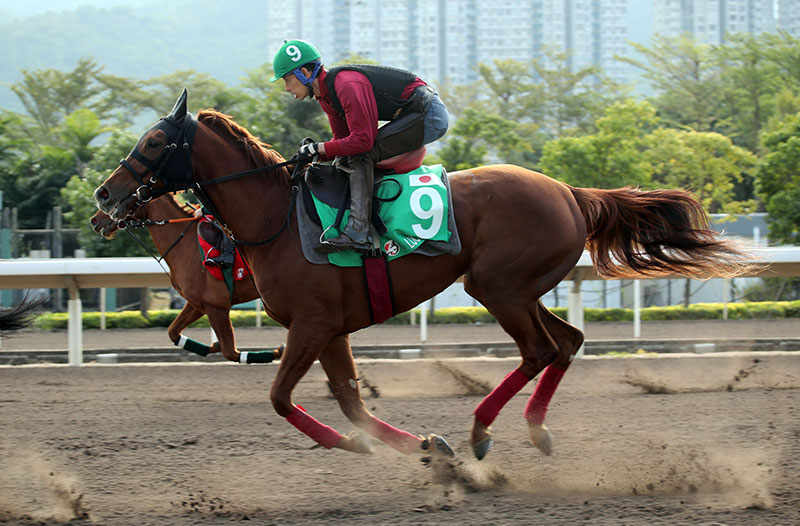 Lucky Lilac works at Sha Tin this week.
