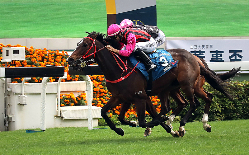 Waikuku wins the G1 Stewards' Cup in January under Joao Moreira.