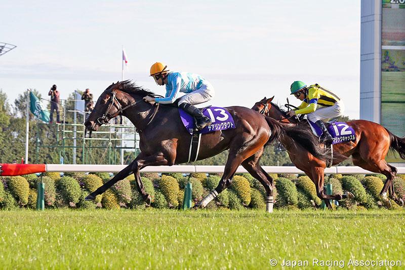 Daring Tact is the sixth ever winner of the Japanese Fillies' Triple Crown.