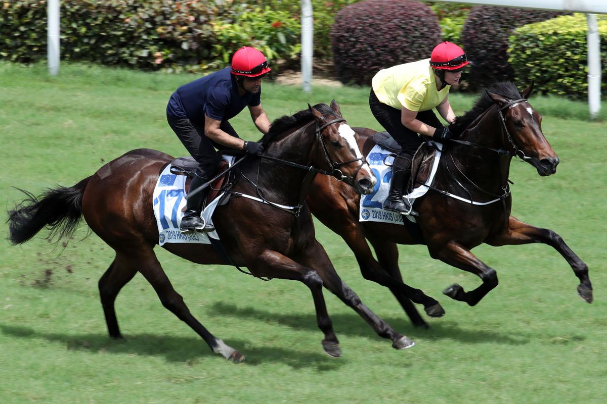 兩匹北半球三歲馬,包括編號17(父系Frankel,母系Noelani)及編號22(父系Exchange Rate,母系Margate)的拍賣馬,今早在沙田馬場結伴試跑。