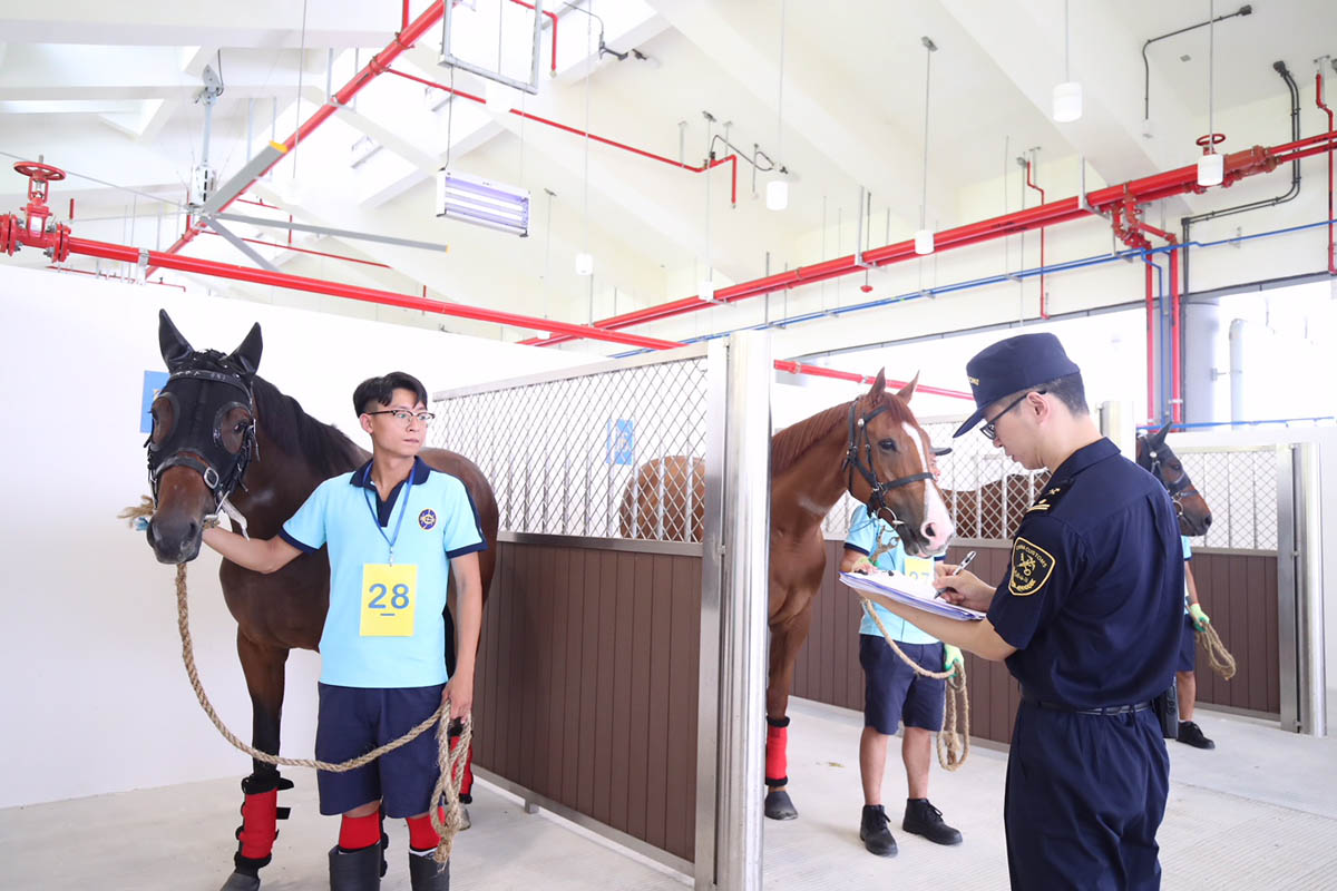 A total of 21 in-training horses arrive at Conghua Training Centre this morning.