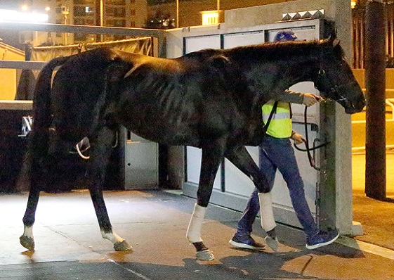Photo Release - First overseas contenders arrive for LONGINES Hong Kong International Races