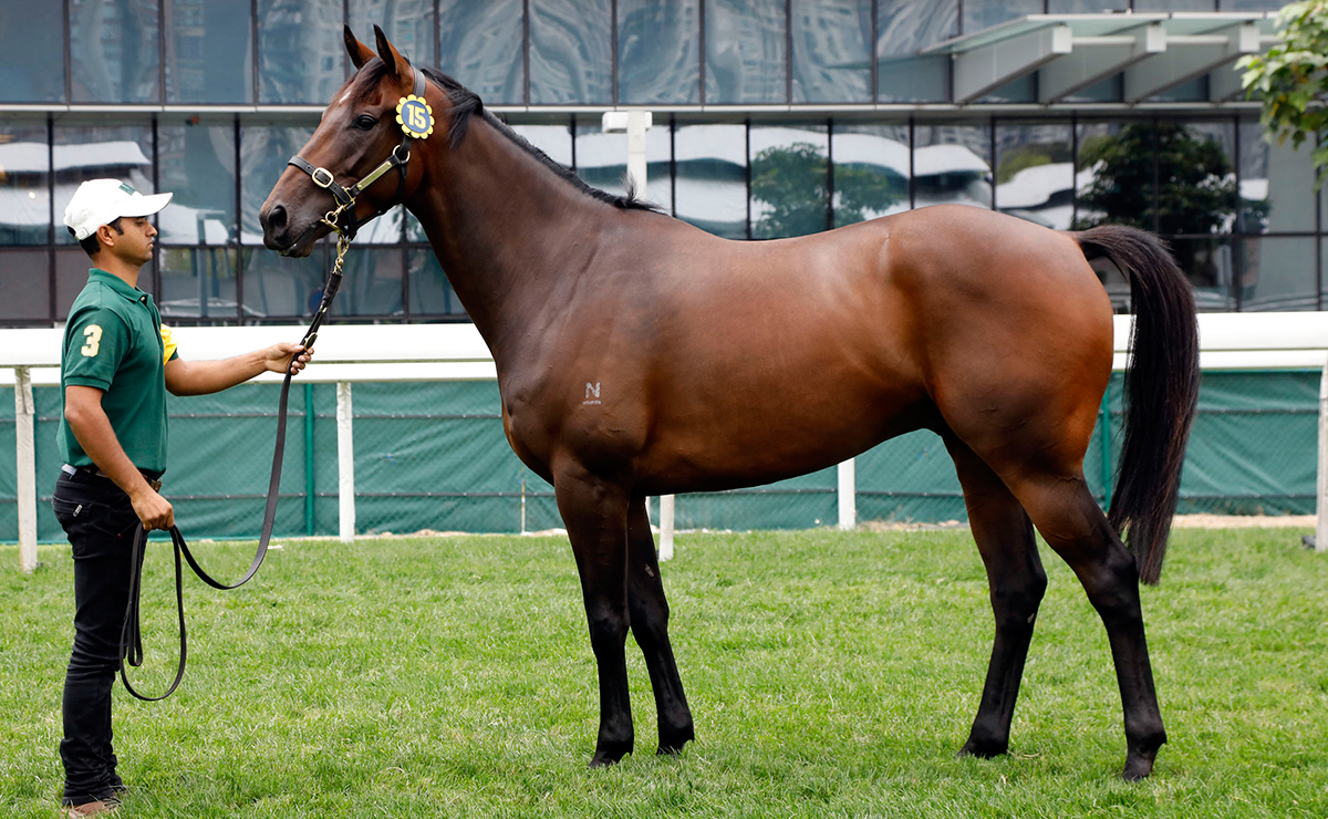 Lot 15, an Australian-bred bay gelding by Exceed And Excel.