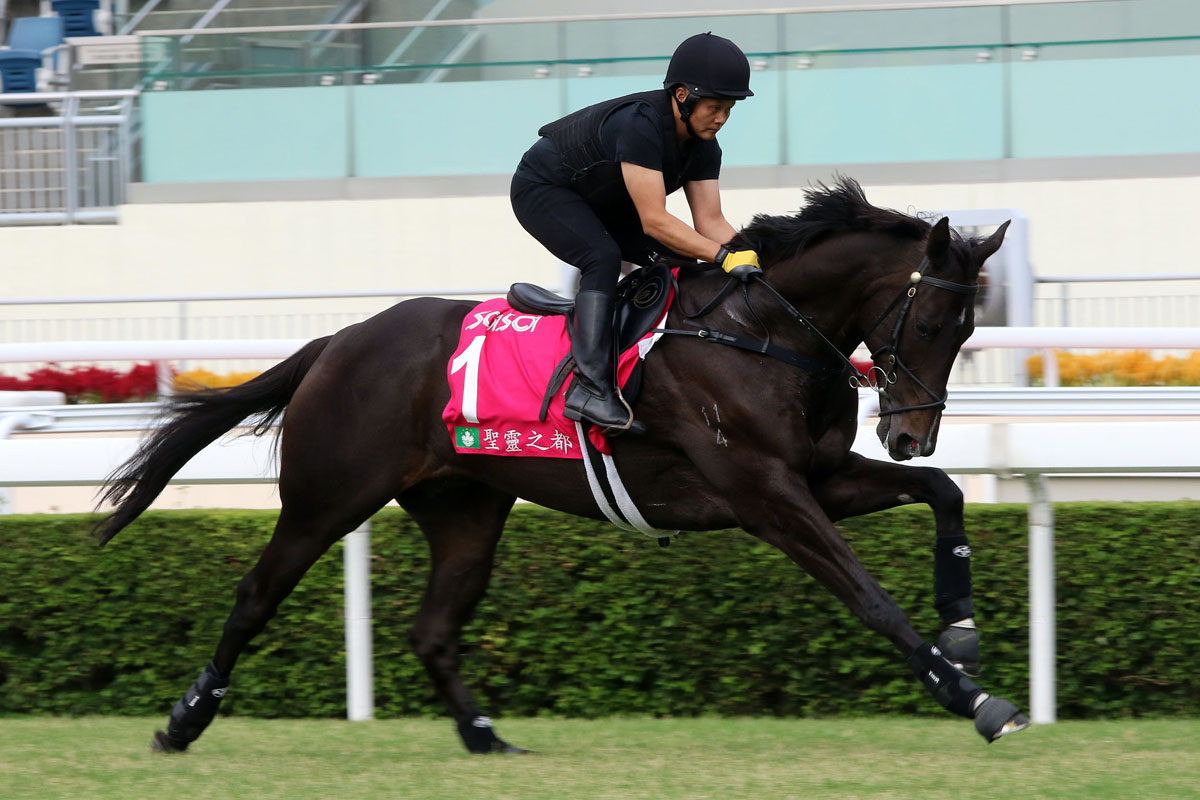 Sacred Capital works at Sha Tin this week.