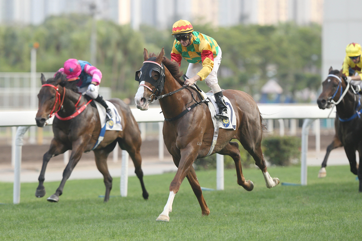 Mighty Giant is aiming to win his fourth consecutive race.