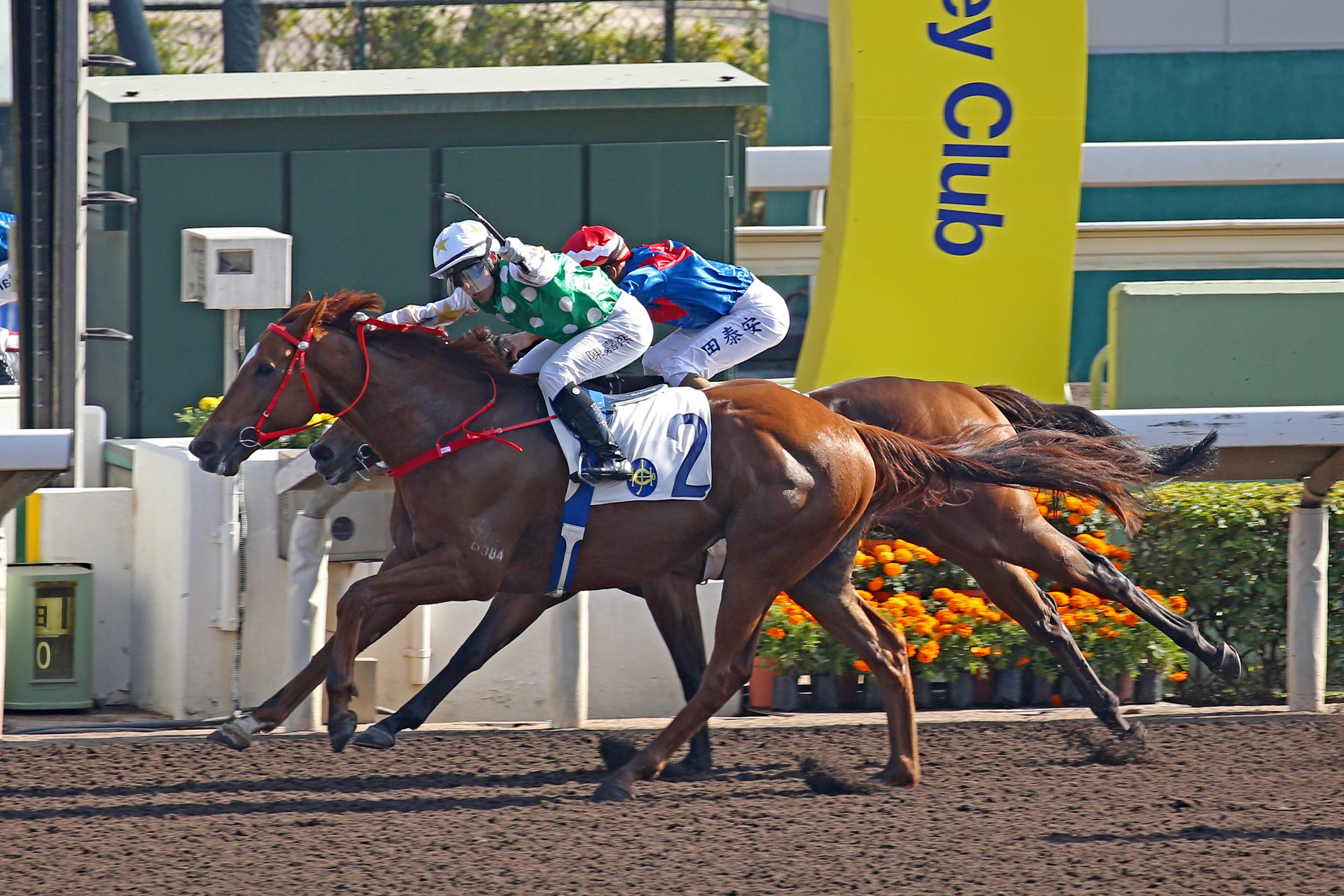 harvest moon 64 horse race betting 101