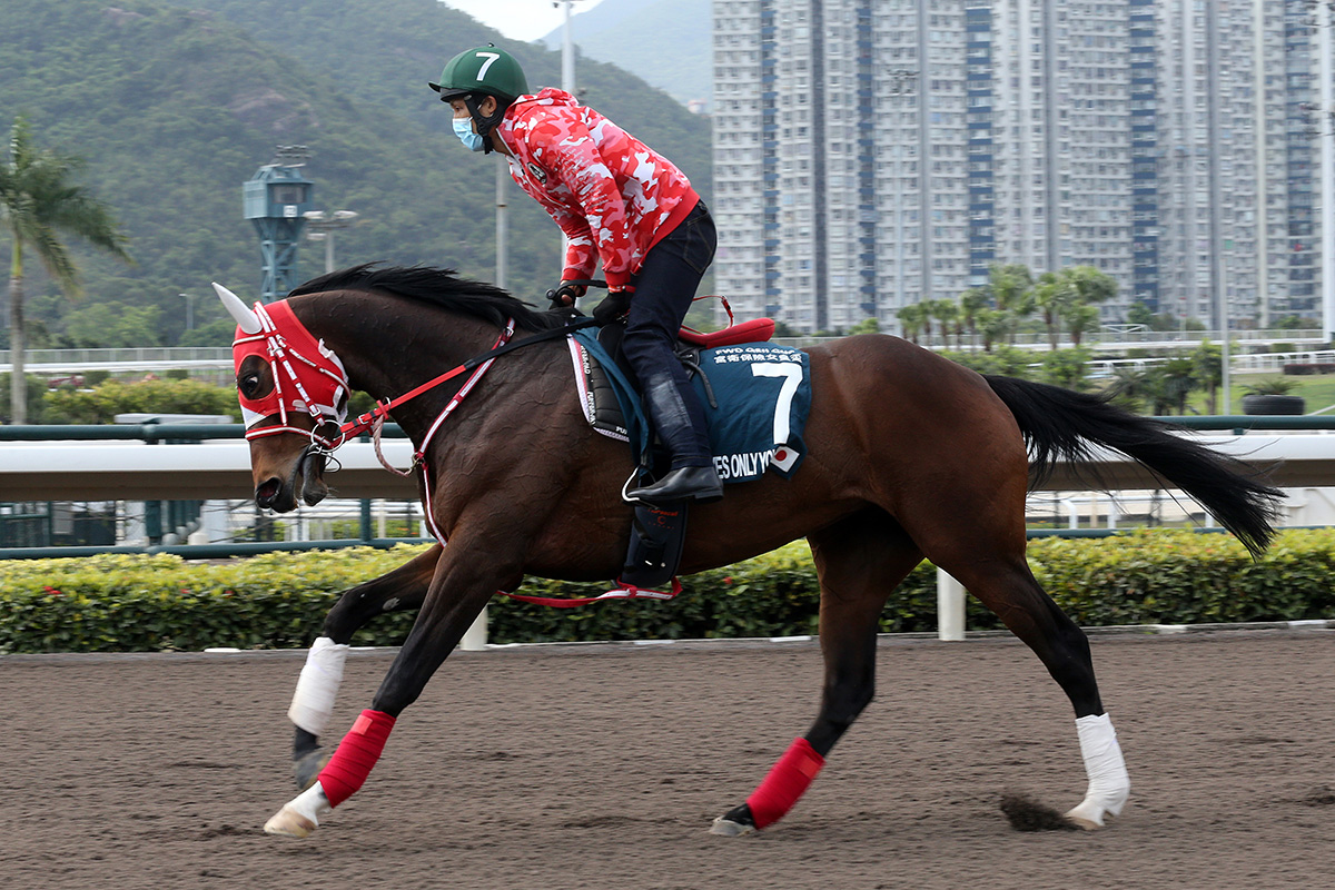 Loves Only You works at Sha Tin.