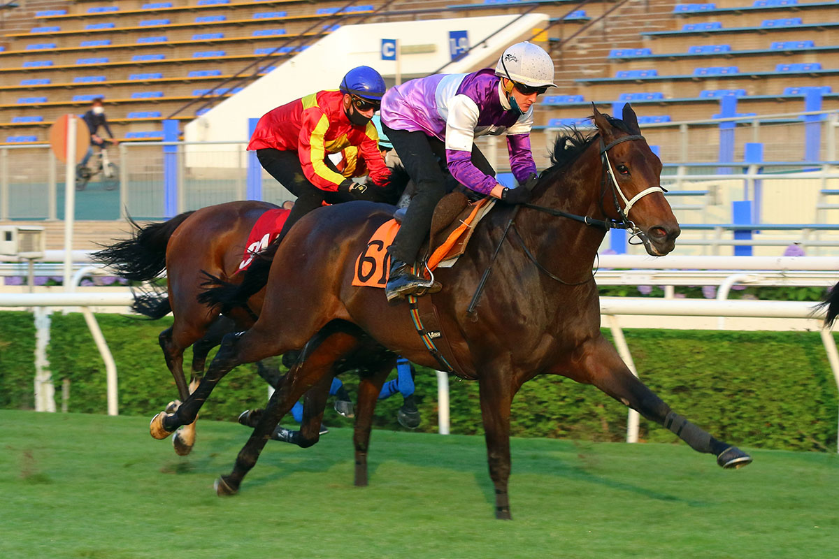 Rattan works home under Chad Schofield at Sha Tin this morning.