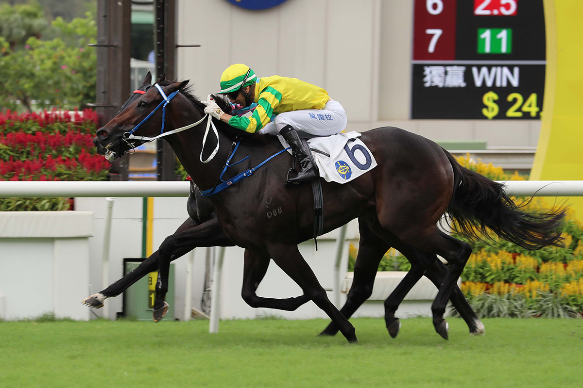 Sky Darci heads back to Sha Tin in search of an eighth win.